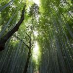 フィトンチッドの効果や成分、森林浴との関係やフィトンチッド商品について