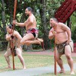マオリのハカの意味やハンギなど、歴史や文化に触れるNZ観光