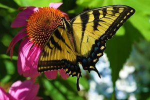 butterfly-1364044_1920