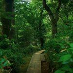 高尾山の日帰り温泉9つを紹介します
