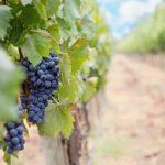 塩尻周辺のワイナリーで見学ができ、ワイン購入やレストランが楽しめるところは?おすすめを紹介。